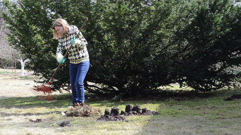 woman raking leaves in pile next to the molehills Footage