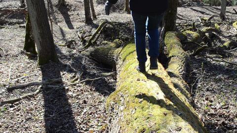 girl descends downhill fallen mossy tree trunk Footage