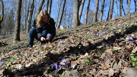 girl in forest between the leaves reaps violet and goes Footage