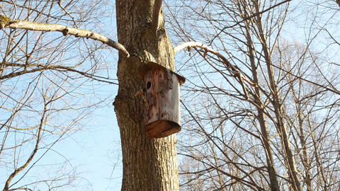 tree bark made nesting boxes hung on a tree branch in park Footage