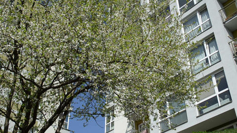 Fruit tree blooms move and chafer bugs fly under high flat house Footage
