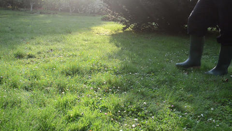 early morning lawn grass dew drops. man with rubber boots walk Footage