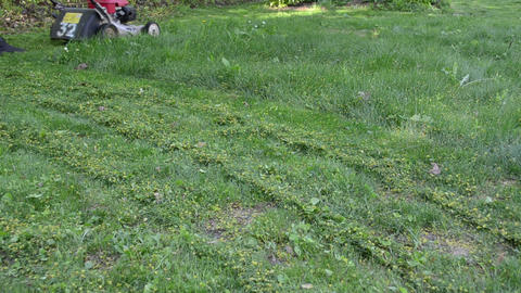 Girl in shorts mows lawn in summer garden yard Footage