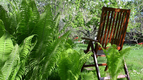 Empty wooden chair fern plant leaves and blooming fruit trees Footage