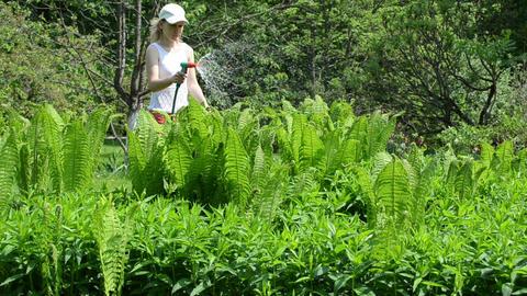 woman watering fern plants with hand hose sprinkler tool Footage