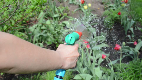 Hand of gardener hold garden hose and watering flowers in spring Footage