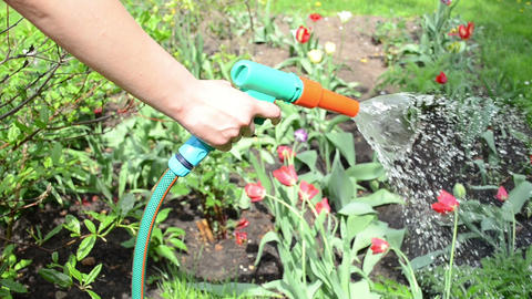gardener girl hand stop watering flowers in garden Footage