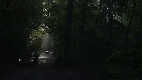 Car traffic in dense morning fog covered forest road Footage