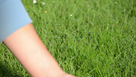 human hand touch feel wet grass covered with morning dew drops Footage