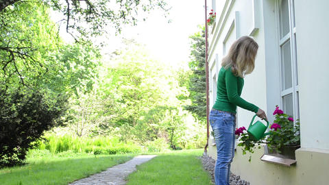 Attractive woman with watering-can water flowers on window sill Footage