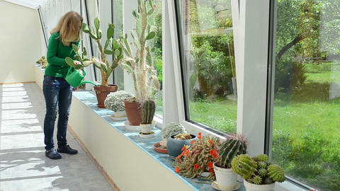 girl watering cactus plants with watering can in conservatory Footage