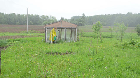 Woman water plants close greenhouse walk away with raincoat Footage
