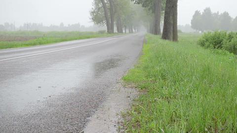 water rain drops fall on asphalt road between trees Footage