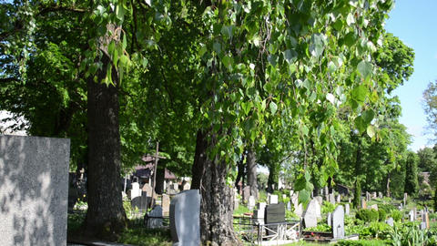 birch trees grow in rural cemetery and grave tomb stones Footage