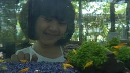 Asian girl looks at colorful shrimp swimming in aquarium Footage