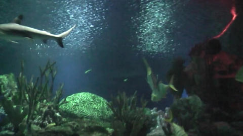 shark floating in the aquarium. slow motion Footage