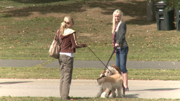 Women Walking Their Dogs (3 of 5) Footage