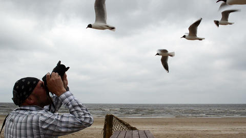 photographer man shoot take photo of flying seagull gull bird Footage