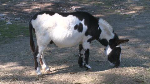 Animals at Heckscher Farm (2 of 4) Footage