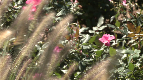 Wildflowers blowing in breeze Stock Video Footage