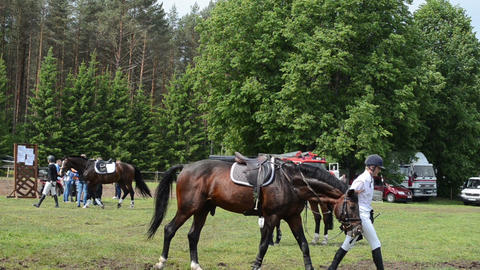 People riders prepare horses for steeplechase barrier race Stock Video Footage