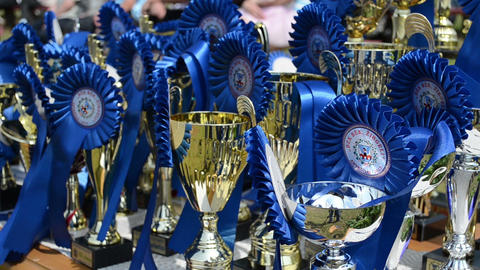 Closeup of horse race cups awards trophy prepared for... Stock Video Footage