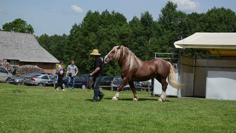 cowboy man master demonstrate his saddle heavy horse in fair Stock Video Footage