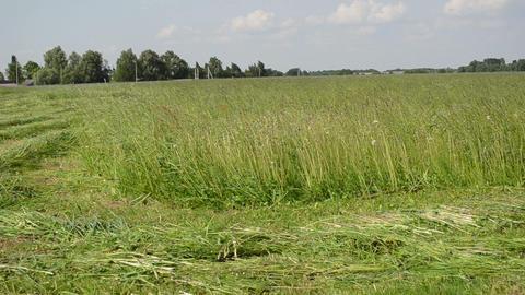 tractor sharp blade cuts grass farmer field Stock Video Footage