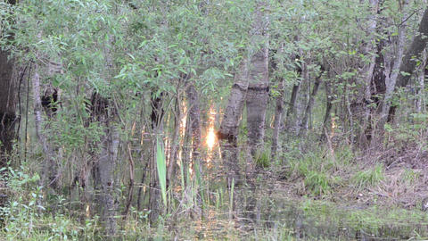 flooded grove water glittering with sunlight Footage