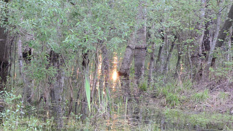 flooded grove water glittering with sunlight Stock Video Footage