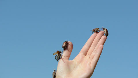 woman fingers crawls a lot of brown beetles and flies Stock Video Footage