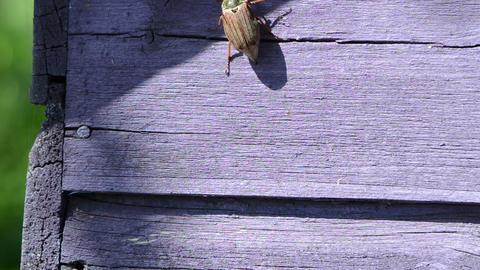 beetle antennas exploring space climbs up through purple... Stock Video Footage