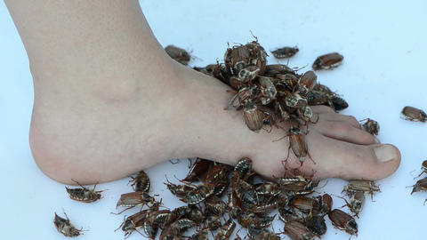 barefoot woman foot pile of brown crawling maybug Stock Video Footage