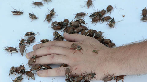 man palm pile of bugs crawls intruding between the fingers Footage