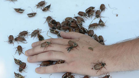 man palm pile of bugs crawls intruding between the fingers Stock Video Footage