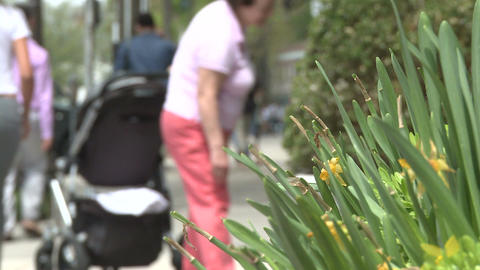 People walking along sidewalk with plants on the side (4... Stock Video Footage