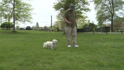 Man's best friend (3 of 3) Stock Video Footage
