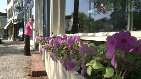 Beautiful flowers along a city street (5 of 5) Stock Video Footage