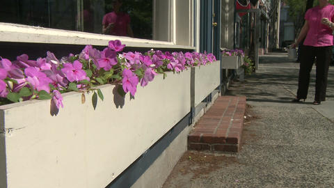 Beautiful flowers along a city street (2 of 5) Stock Video Footage