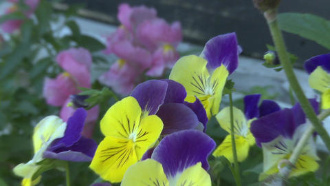 Bright attractive flowers (2 of 2) Stock Video Footage