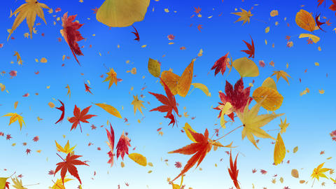 Autumn Leaf tornado Ar 2 4 K Animation