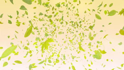 Green Leaf front Ar 4 K Animation