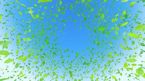 Green Leaf front B Cbb 4 K Animation