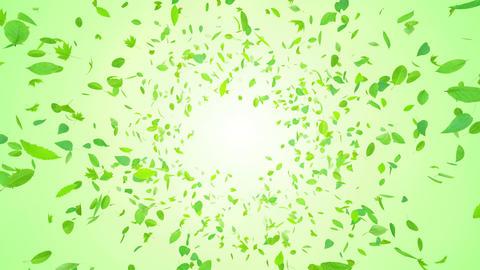 Green Leaf front Bg 4 K Animation