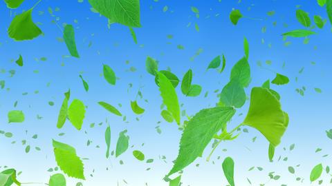 Green Leaf tornado Abb 4 K Animation
