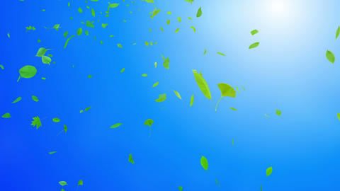 Green Leaf tornado Jbb 4 K Animation