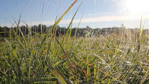 dew on spider web Footage