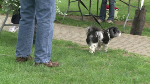 Dog on a leash at a town fair (2 of 2) Stock Video Footage