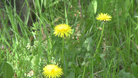 Close-up of wildflowers in field Footage