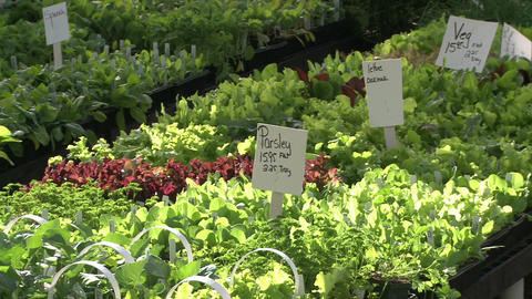 Herbs and produce for sale (2 of 4) Live Action